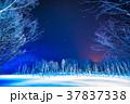《北海道》青い池のライトアップ・美瑛町 37837338