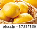 レモンかご盛り 37837369