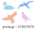 鳥 水彩 37837670