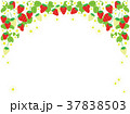 苺 果物 果実のイラスト 37838503