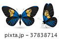 チョウ 蝴蝶 蝶のイラスト 37838714