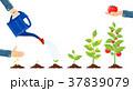 栽培 ガーデニング 園芸のイラスト 37839079