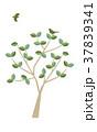 新緑と鳥_01 37839341