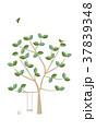 新緑と鳥_08 37839348