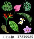 植物 トロピカル 熱帯のイラスト 37839985