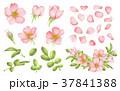 ピンク ピンク色 桃色のイラスト 37841388