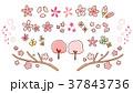 桜 春 セットのイラスト 37843736