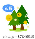 花粉 杉 杉花粉のイラスト 37846515