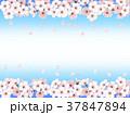 桜 散る 春のイラスト 37847894