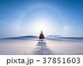 《北海道》冬の美瑛・クリスマスツリーの木 37851603