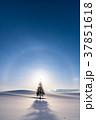 《北海道》冬の美瑛・クリスマスツリーの木 37851618