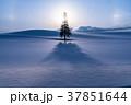 《北海道》冬の美瑛・クリスマスツリーの木 37851644