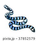 海 ヘビ 蛇のイラスト 37852579
