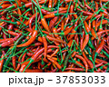 lot of red chilli peppers 37853033