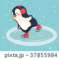 ぺんぎん ペンギン スケーターのイラスト 37855984