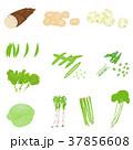 春野菜 (タケノコなど) イラスト セット 37856608