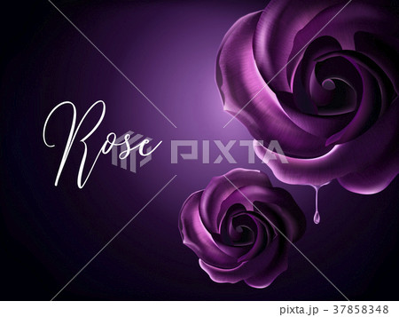 Purple roses elements 37858348
