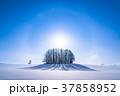 《北海道》冬のマイルドセブンの丘・美しい幻日環 37858952
