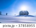 《北海道》冬のマイルドセブンの丘・美しい幻日環 37858955