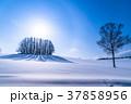 幻日環 雪原 マイルドセブンの丘の写真 37858956