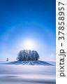 幻日環 雪原 マイルドセブンの丘の写真 37858957