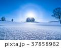 《北海道》冬のマイルドセブンの丘・美しい幻日環 37858962
