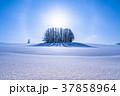 幻日環 雪原 マイルドセブンの丘の写真 37858964