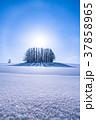 《北海道》冬のマイルドセブンの丘・美しい幻日環 37858965