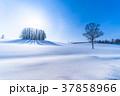 幻日環 雪原 マイルドセブンの丘の写真 37858966