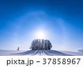 幻日環 雪原 マイルドセブンの丘の写真 37858967