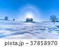 幻日環 雪原 マイルドセブンの丘の写真 37858970