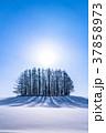 雪原 マイルドセブンの丘 美瑛町の写真 37858973