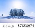 雪原 マイルドセブンの丘 美瑛町の写真 37858974
