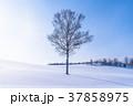 《北海道》冬の美瑛・マイルドセブンの丘 37858975