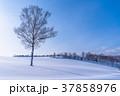 雪原 マイルドセブンの丘 美瑛町の写真 37858976