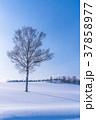 雪原 マイルドセブンの丘 美瑛町の写真 37858977