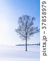 雪原 マイルドセブンの丘 美瑛町の写真 37858979
