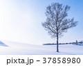 雪原 マイルドセブンの丘 美瑛町の写真 37858980