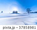 《北海道》冬の美瑛・マイルドセブンの丘 37858981