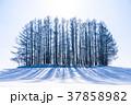 雪原 マイルドセブンの丘 美瑛町の写真 37858982