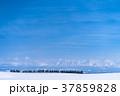 《北海道》冬の美瑛・雪原風景の大地 37859828