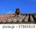 沖縄 シーサー 屋根の写真 37865619