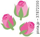 バラ ローズ 植物のイラスト 37872350