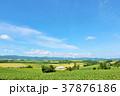 青空 空 丘の写真 37876186