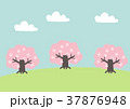 春 桜 ベクターのイラスト 37876948