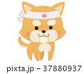 日本一の桃太郎のお供の犬 37880937