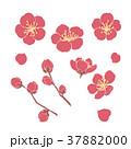 花 梅 梅の花のイラスト 37882000