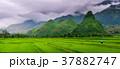 パノラマ パノラマの 野原の写真 37882747