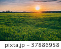 Spring Sun Shining Over Agricultural Landscape Of 37886958