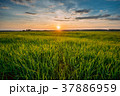 Spring Sun Shining Over Agricultural Landscape Of 37886959